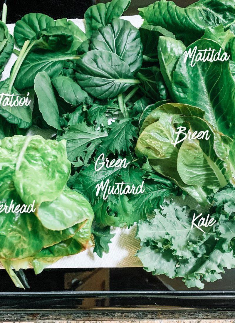 benefits of eating bitter greens tatsoi matilda butterhead green mustard breen kale