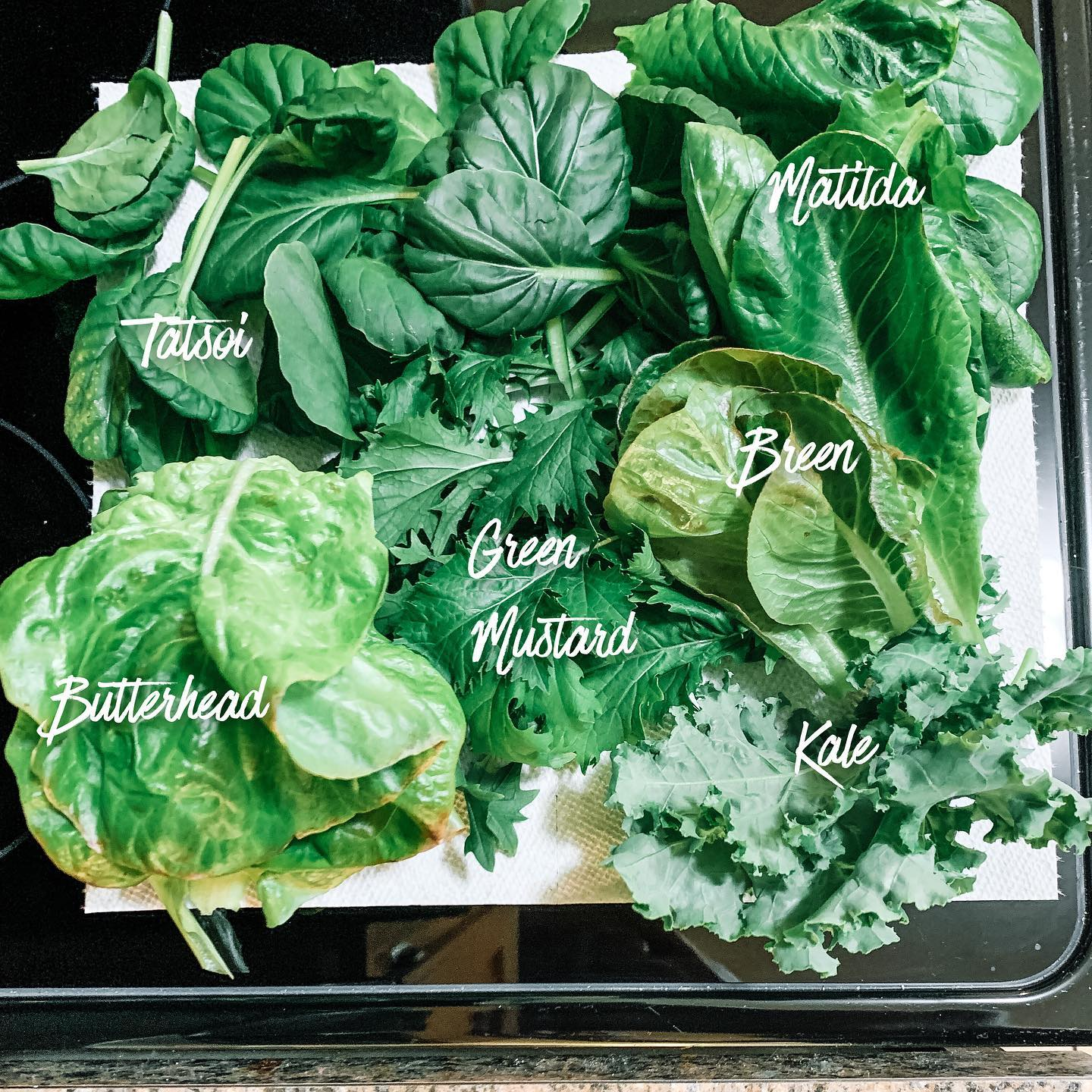 The Benefits of Eating Bitter Greens
