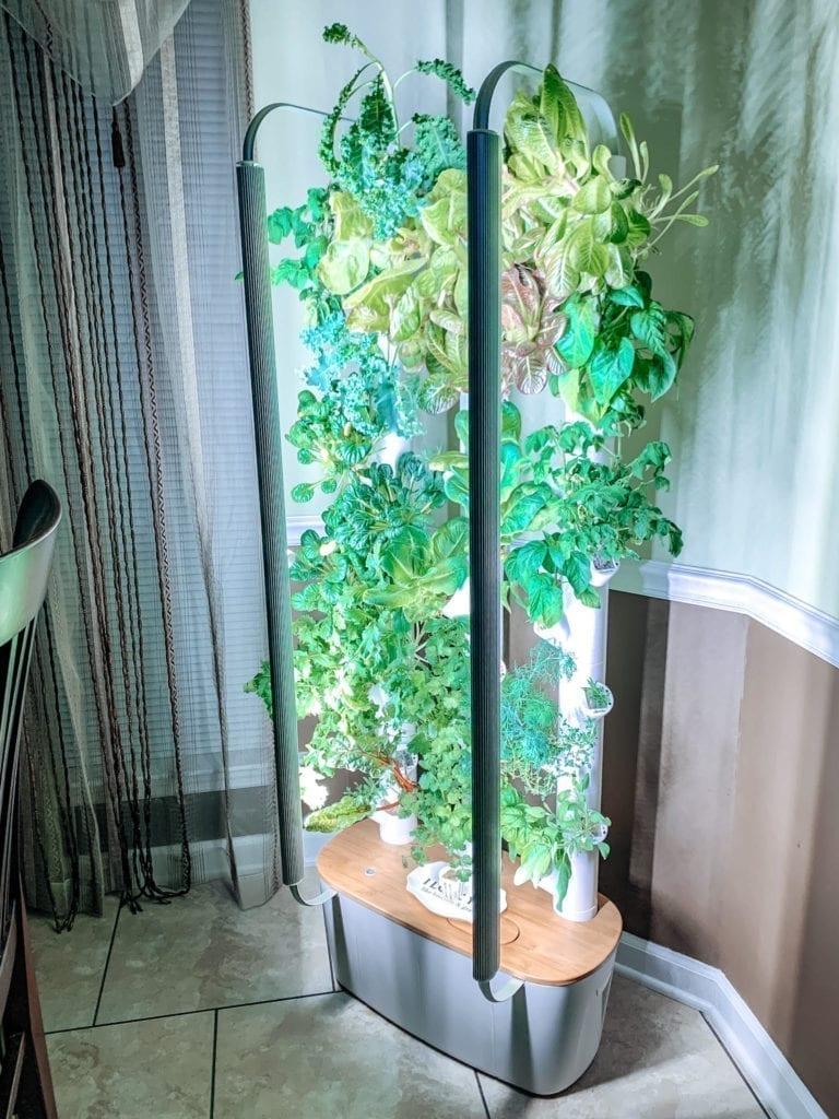 gardyn in home hydropnic vetical garden system